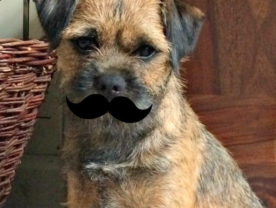 Barney Supports Movember – dogs count too!