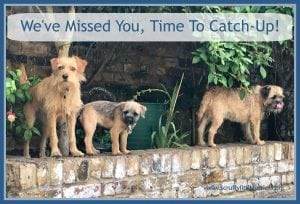 Catch-Up #Catch-Up www.scruffylittleterrier.com
