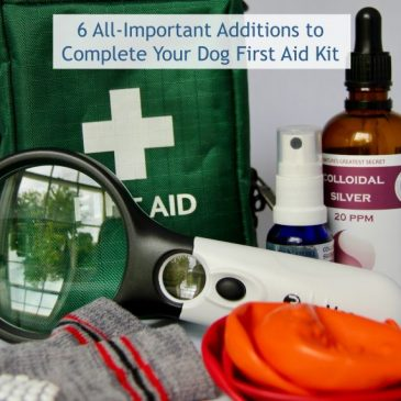6 All-Important Additions to Complete Your Dog First Aid Kit
