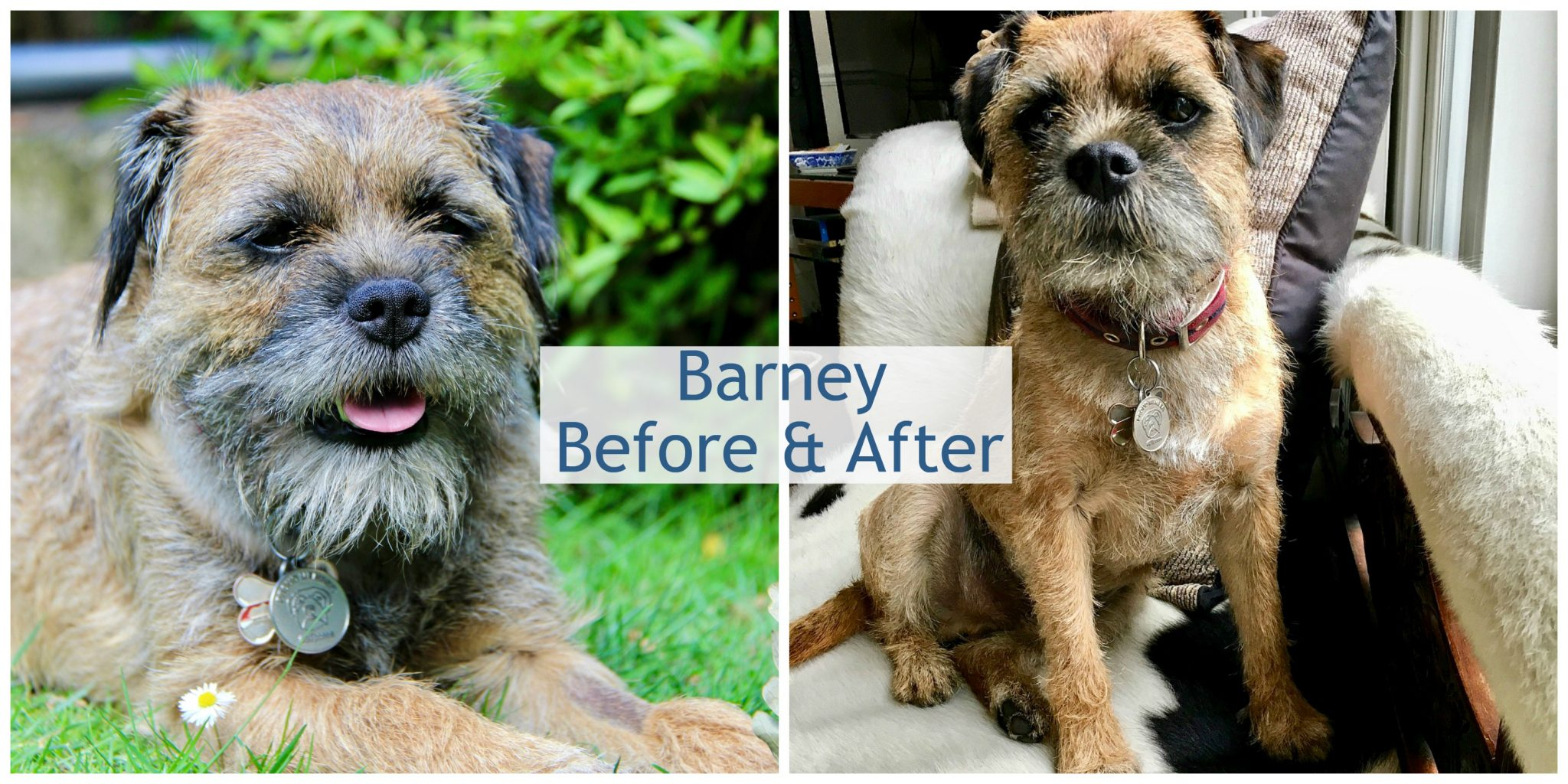 Dog Groomer {Dog Grooming} #DogHealth #Dogs #Grooming www.scruffylittleterrier.com