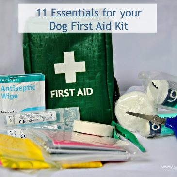 11 Essentials For Your Dog First Aid Kit
