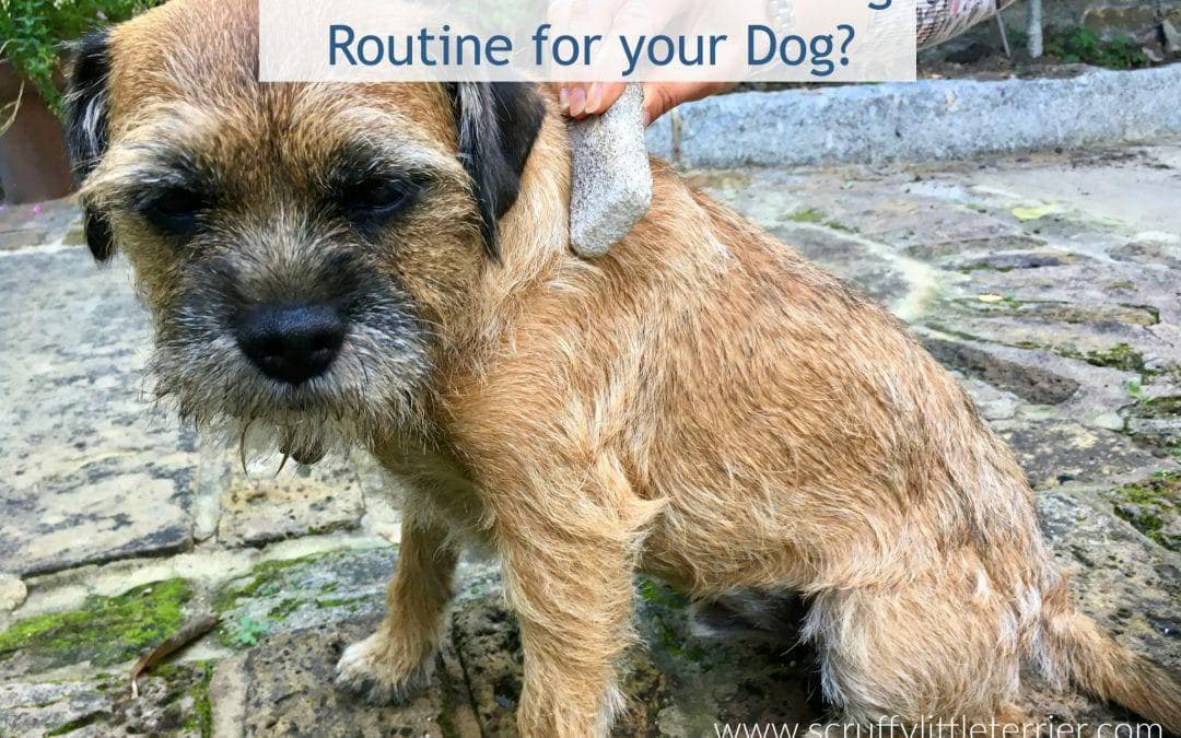 Do You Have a Quick & Easy Dog Grooming Routine?