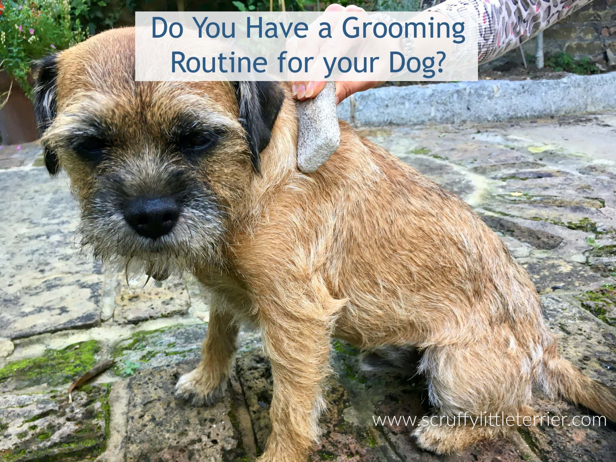 Dog Grooming {Dog Grooming Routine} #DogHealth #Grooming #Dogs www.scruffylittleterrier.com