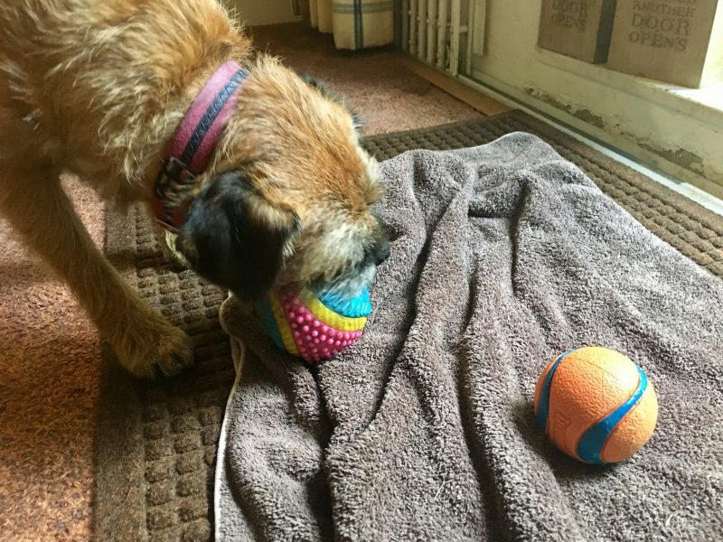 Our Two Favourite (So Far Indestructible) Dog Balls