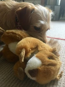 Dog Soft Toy {Dog Soft Toys} #DogToy #Dog SoftToy #Squirrel #Review www.scruffylittleterrier.com