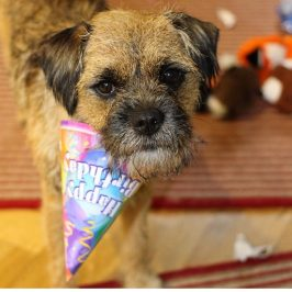 Barney's 4th Birthday Wish List ~ Presents Every Dog Will Love