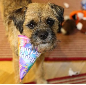 Birthday Wish List #Birthday #Treats #Toys #Dog Friendly #Reviews www.scruffylittleterrier.com
