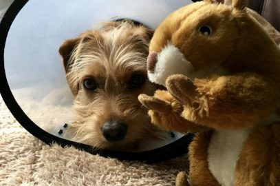 Dog Soft Toy Review ~ Your Dog Will Love Sammy Squirrel!