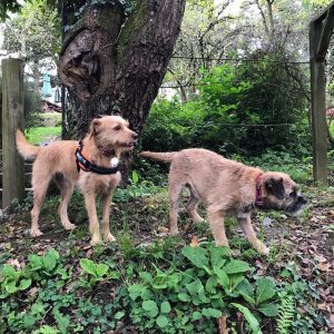 Walking The Dog Day {Enjoying Walking Your Dog} #DogWalks #WalkingTheDogDay www.scruffylittleterrier.com