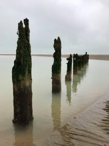 Rye Harbour {Dog Friendly Holiday} #WinchelseaBeach #RyeHarbour #Review #EastSussex #Holiday #DogFriendly #Walk #BeachLife www.scruffylittleterrier.com