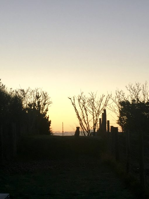 Rye Harbour {Dog Friendly Holiday} #RyeHarbour #Review #SeakaleCottage #EastSussex #Holiday #DogFriendly #Stay www.scruffylittleterrier.com