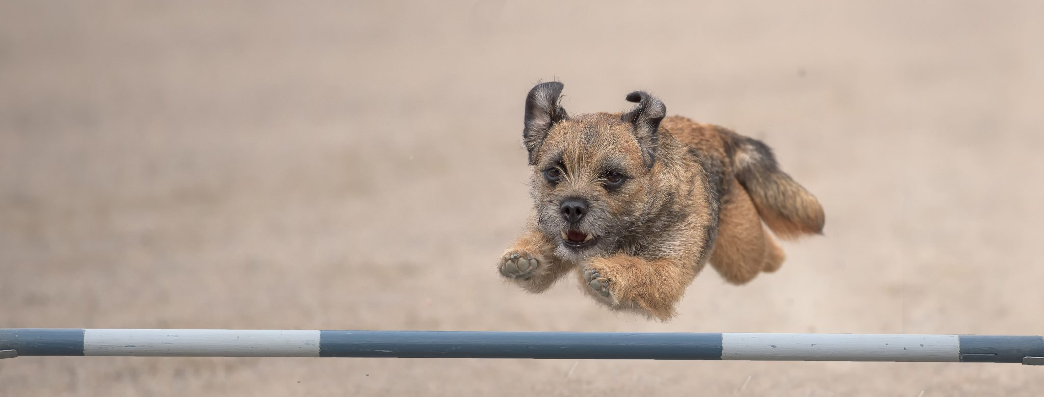 Activities With Your Dog {Activities} #Agility #Activities #Crufts #Exercise #DogTraining #DogActivity www.scruffylittleterrier.com