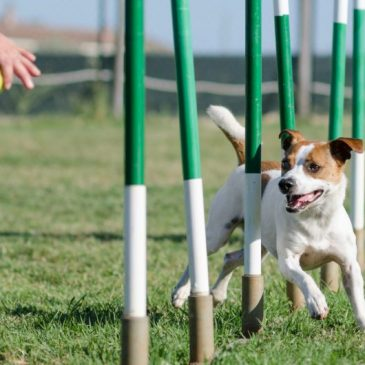 4 Activities from Crufts 2018 ~ For You and Your Dog To Try