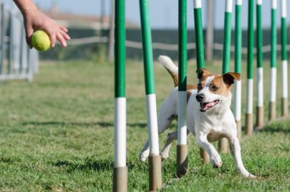 Activities With Your Dog {Activities} #Agility #Obedience #Activities #Crufts #Exercise #DogTraining #DogActivity www.scruffylittleterrier.com