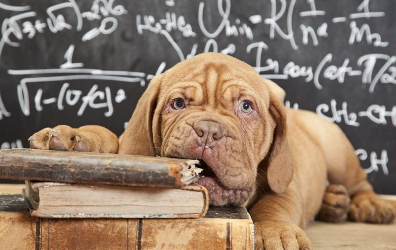 Top 8 Favourite Dog Books on World Book Day