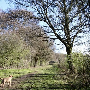 2 Of Our Favourite Forest Dog Walks