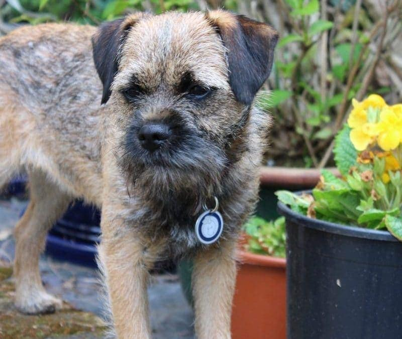 14 Common Flowers & Plants Poisonous To Dogs