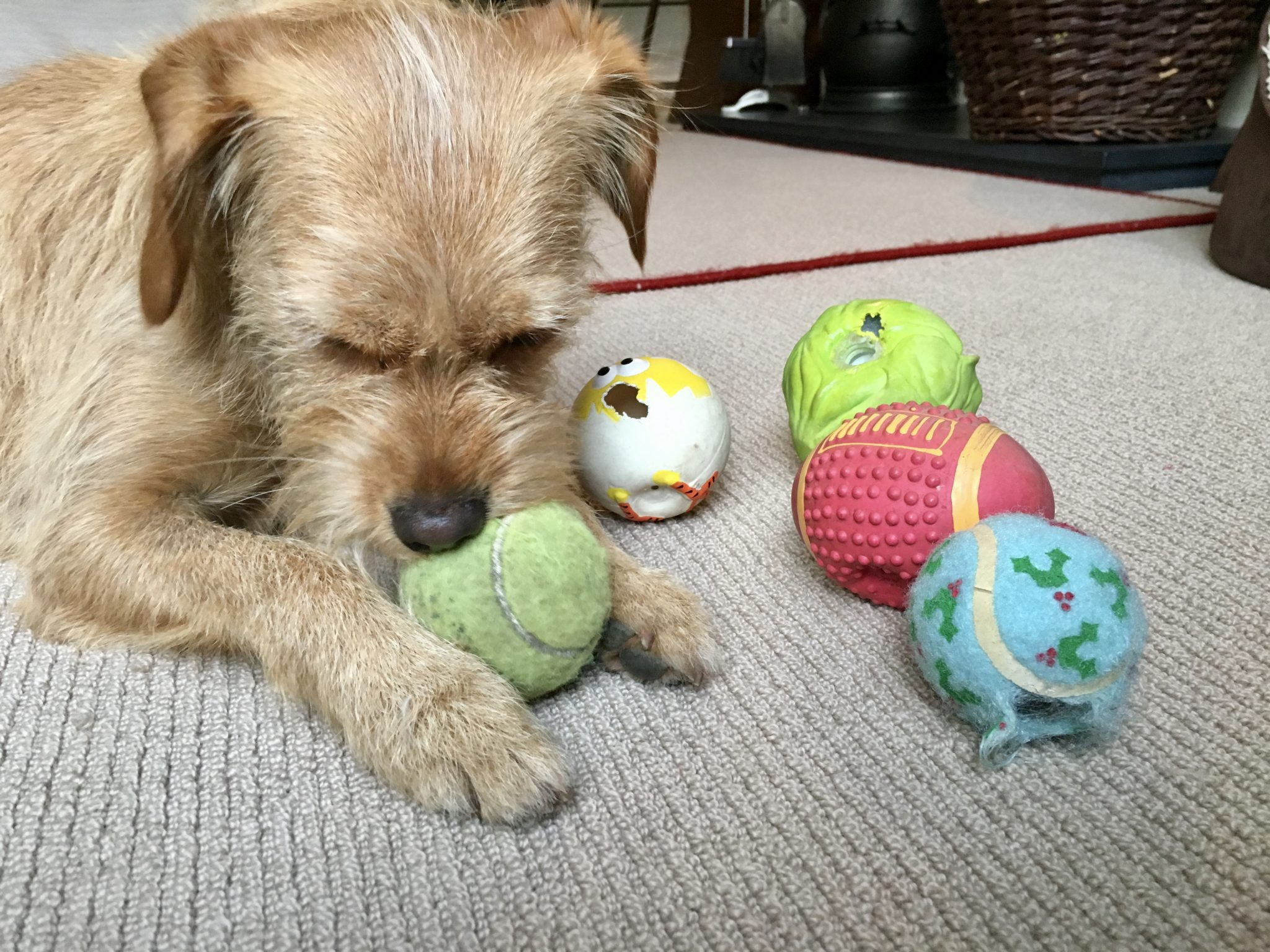 Dog Enrichment Toys {Dog Enrichment Toys & Games} #DogToys #DogEnrichment #DogChews #DogGames #Reviews www.scruffylittleterrier.com