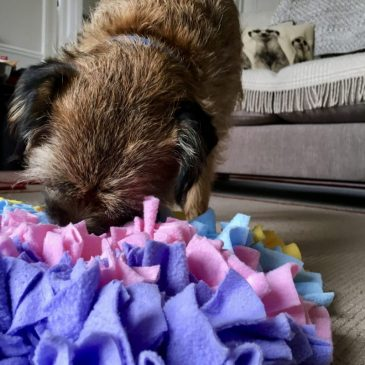 Enrichment Toys & Games Your Dog Will Love