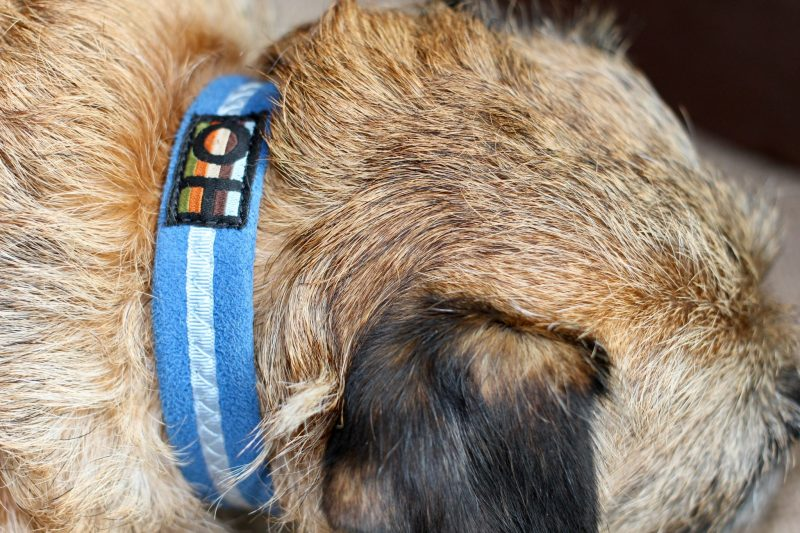 3 Great Quality British Dog Brands That We Love