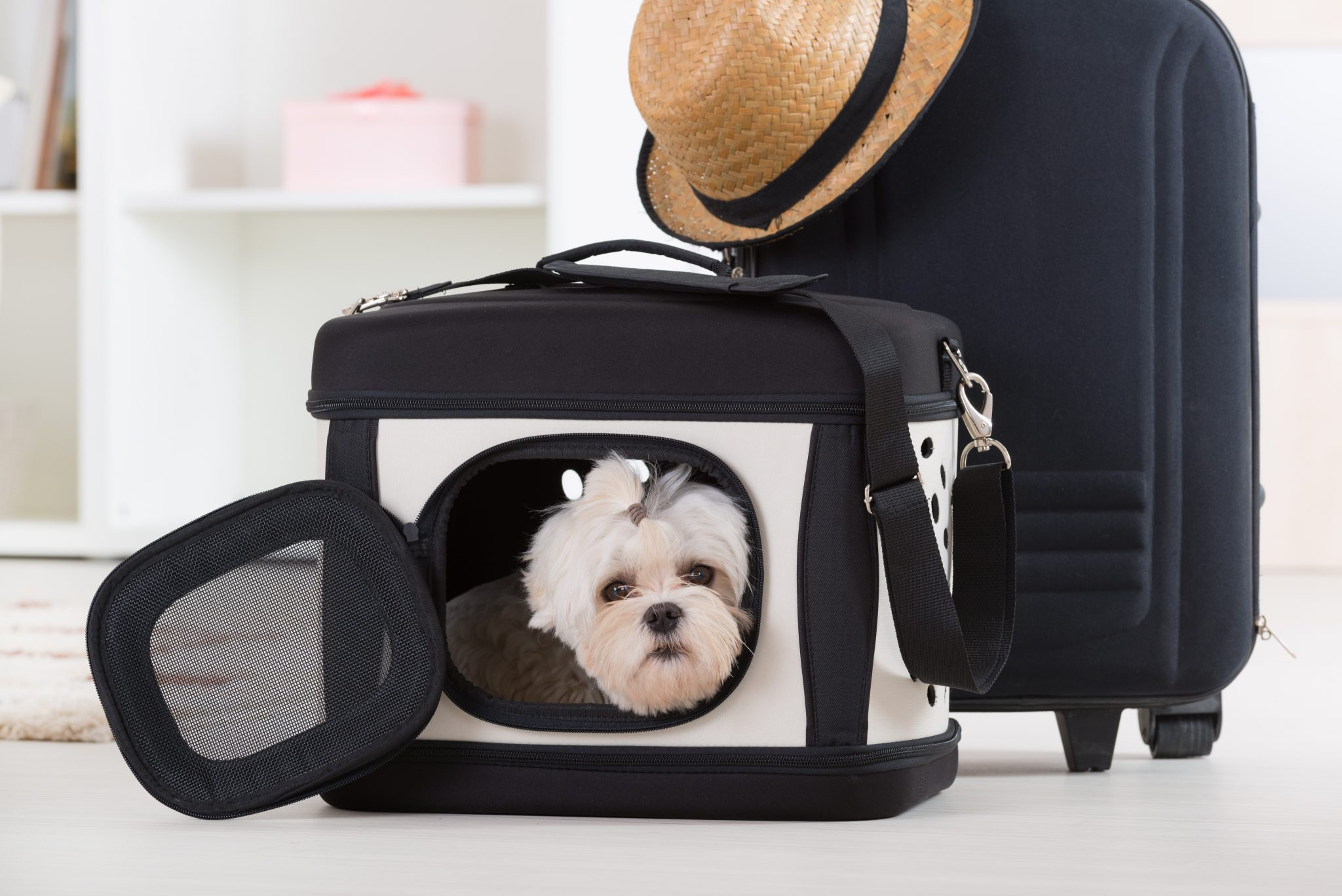 How To Enjoy Going Away Without Your Dog {GoingAwayWithoutYourDog} #GoingAwayWithoutYourDog #GoingAway #NoDog www.scruffylittleterrier.com