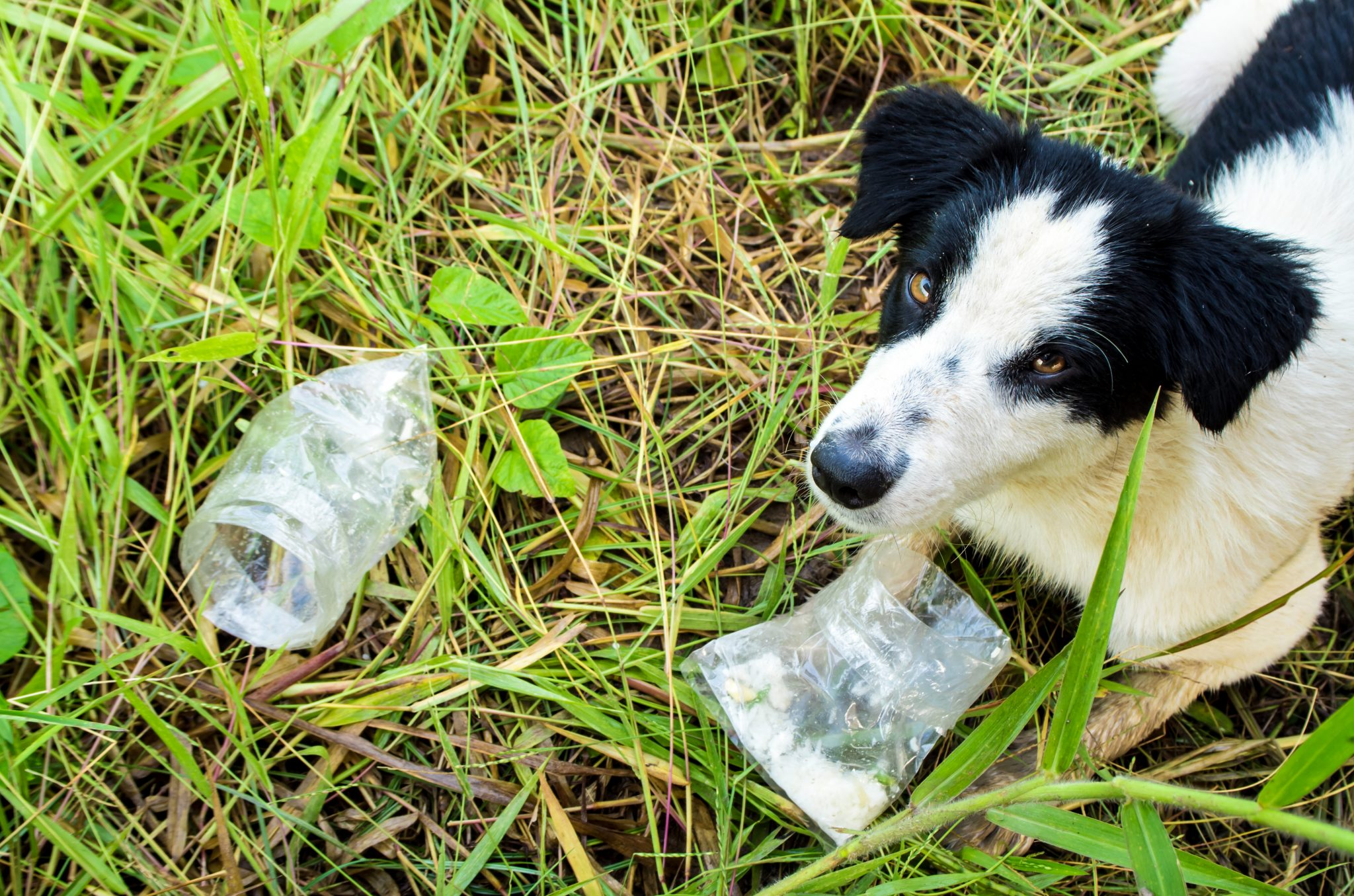 How To Be An Environmentally Friendly Dog Owner World Environment Day {HowToBeAnEnvironmentallyFriendlyDogOwner} #EnvironmentallyFriendlyDogOwner #WorldEnvironmentDay #OrganicDog #NaturalDogProducts #NoPlasticDogProducts www.scruffylittleterrier.com