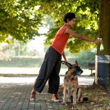 How To Be An Environmentally Friendly Dog Owner