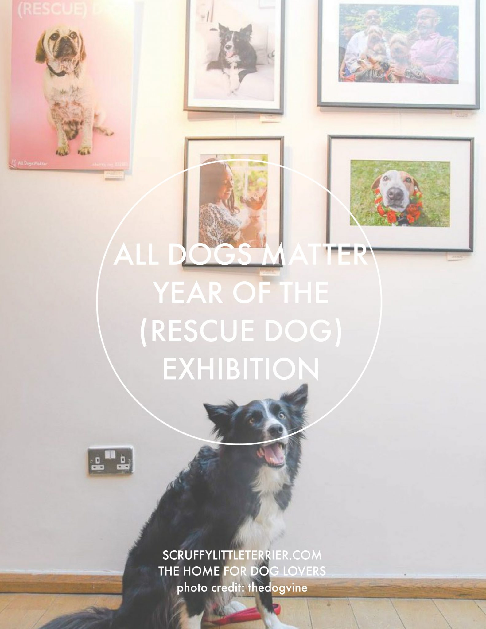 All Dogs Matter {TheYearOfTheRescueDogExhibition} #AllDogsMatter #Photography #Exhibition #RescueDog #DogProducts #London www.scruffylittleterrier.com