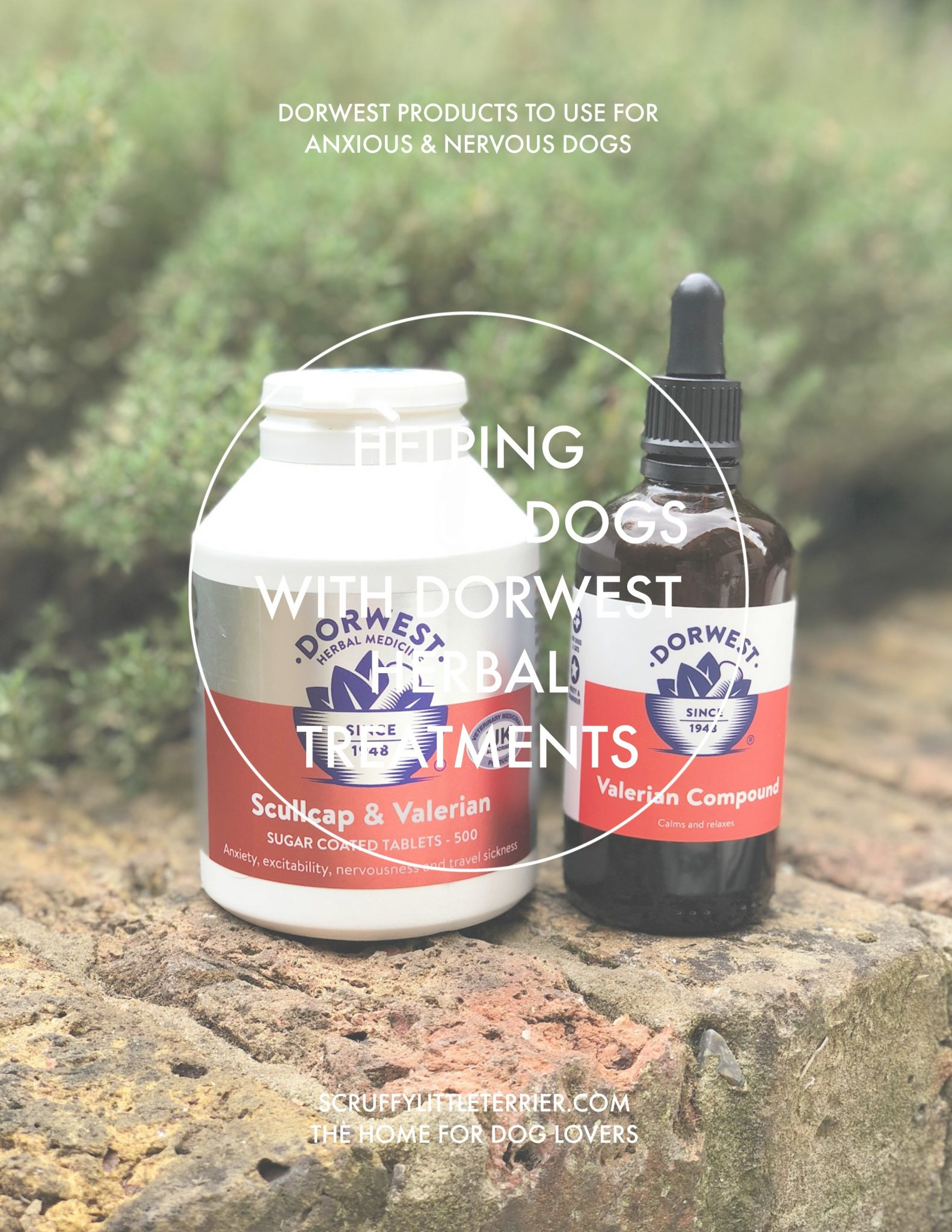 Helping Anxious Dogs With Dorwest Herbal Treatments {HelpingAnxiousDogswithDorwestHerbalTreatments} #Dorwest #Herbal #AnxiousDog #OrganicDog #NaturalDogProducts #DogProducts www.scruffylittleterrier.com