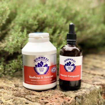 Helping Anxious Dogs With Dorwest Herbal Treatments
