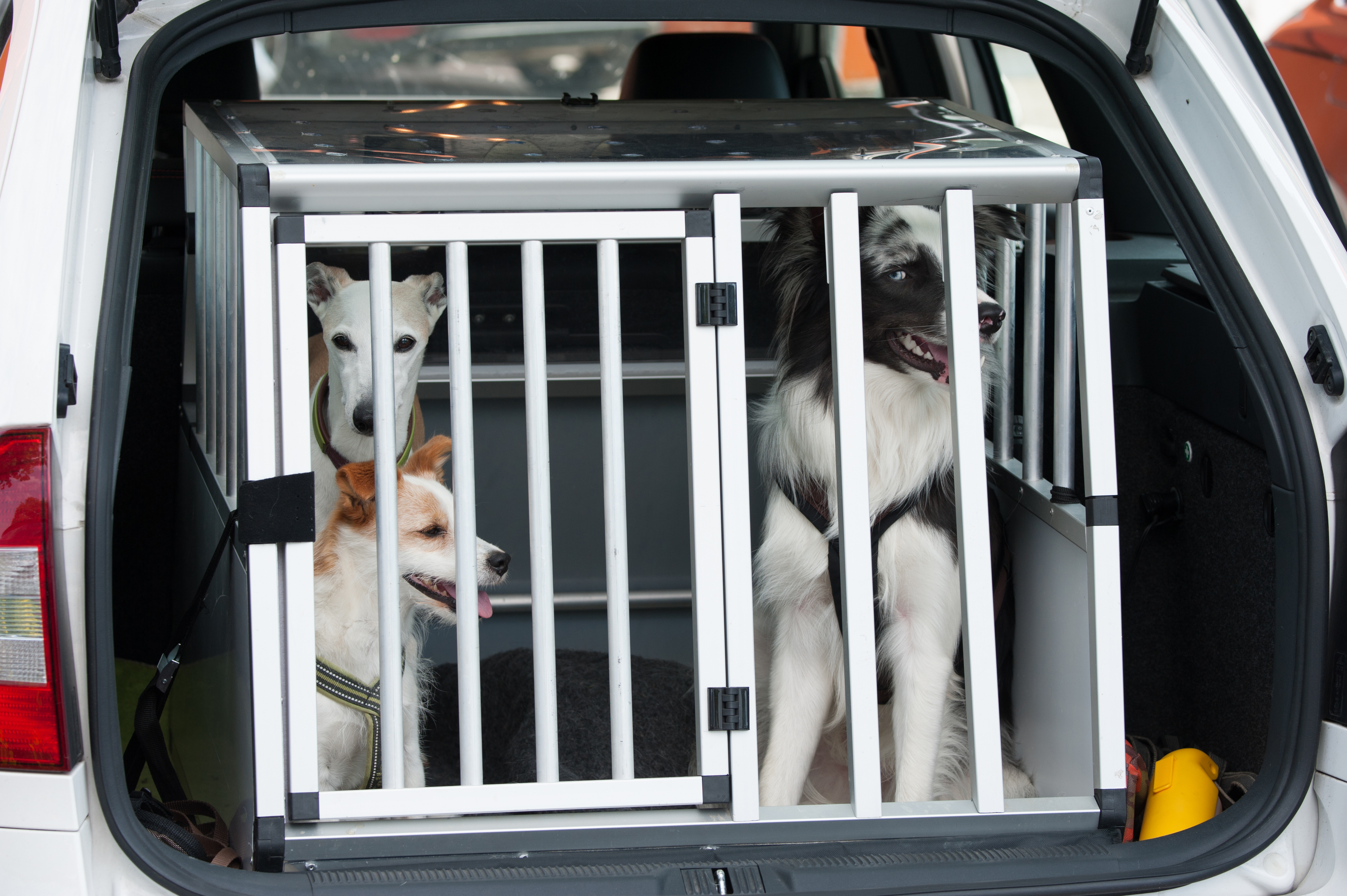 How To Travel Safely With a Dog In The Car {PetTravel} #SafeDogTravel #DogCrate #DogTravel www.scruffylittleterrier.com