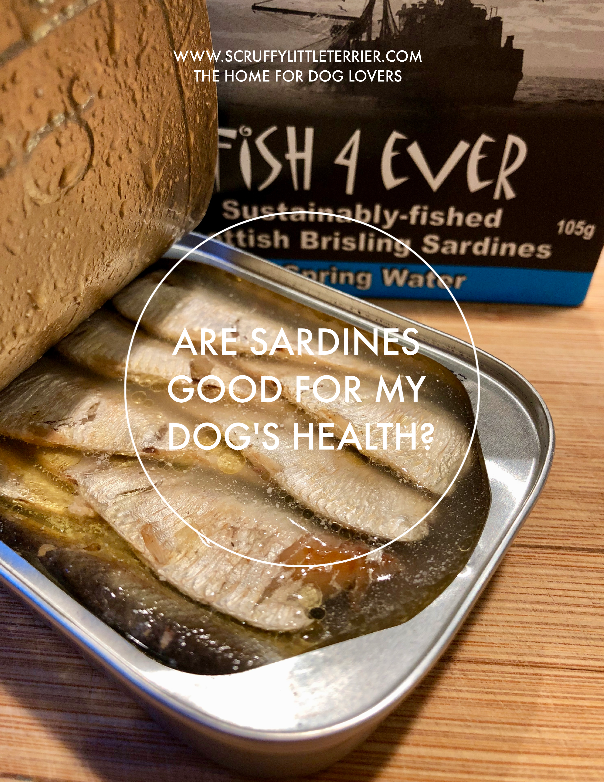 Are Sardines Good For My Dog's Health? {DogNutrition} #HealthyDog #DogTreats #DogHealth #Sardines #DogNutrition www.scruffylittleterrier.com