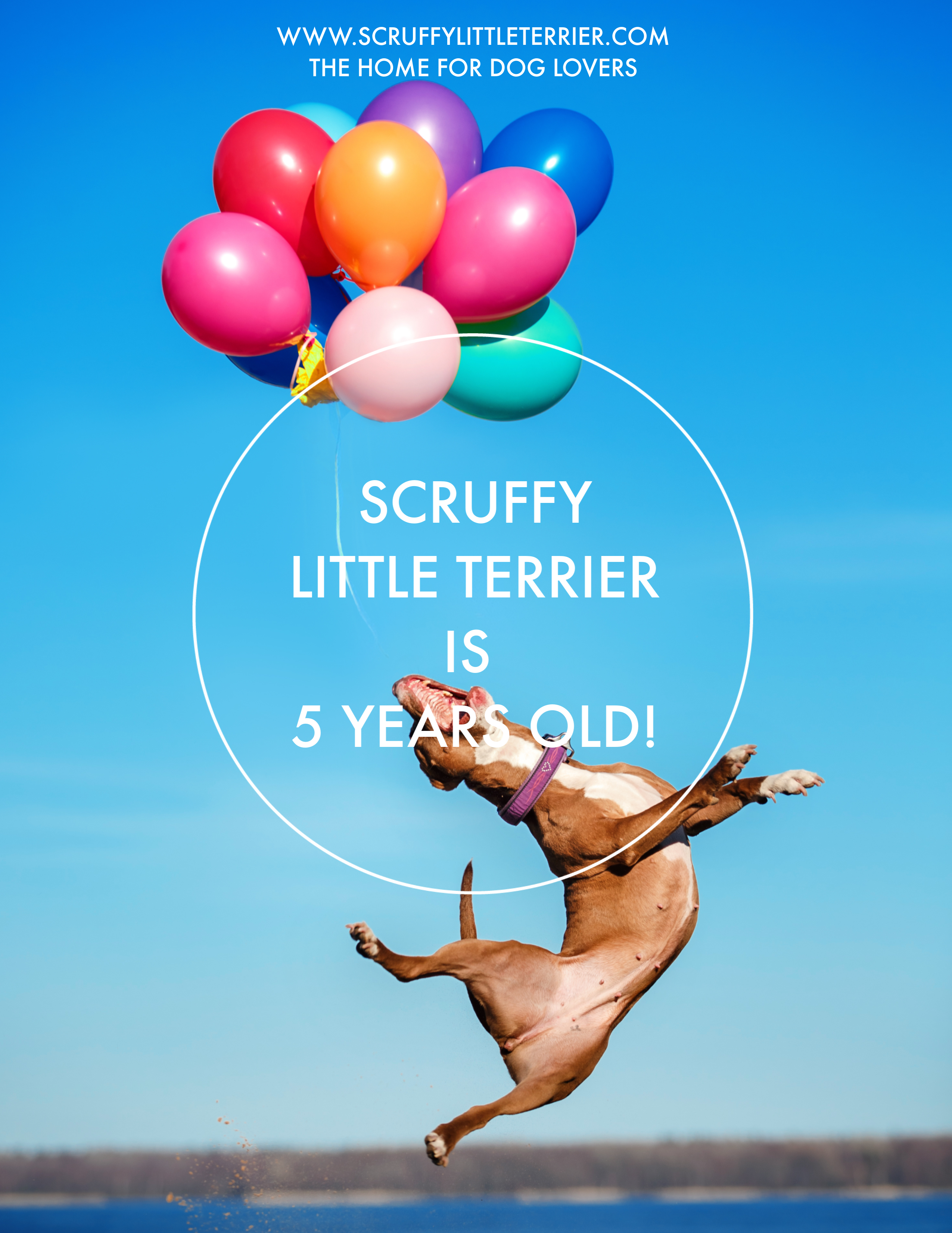 Scruffy Little Terrier is 5 Years Old {Blogaversary} #PetInfluencer #DogBlogger #DogBlog #Blogaversary www.scruffylittleterrier.com