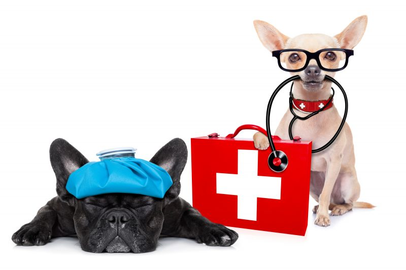 Canine First Aid and CPR Workshop With Rachel Bean RVN