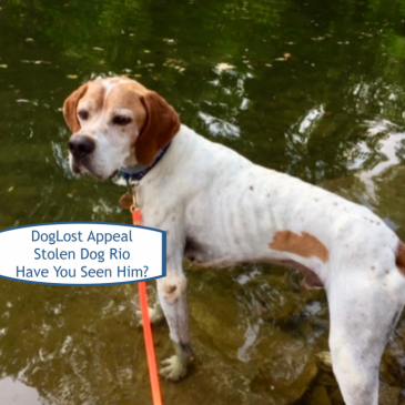 DogLost Appeal ~ Stolen Dog Rio, English Pointer