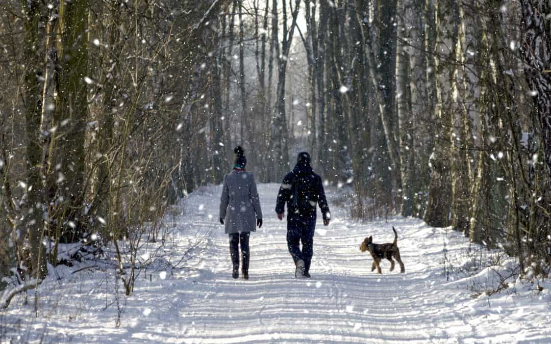 Winter Walking Essentials For Terrier Owners