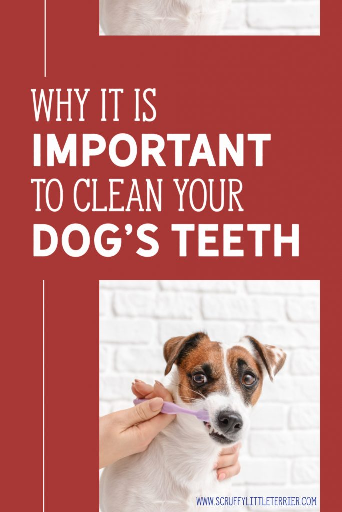 Dog's Teeth Being Cleaned Pinterest Image