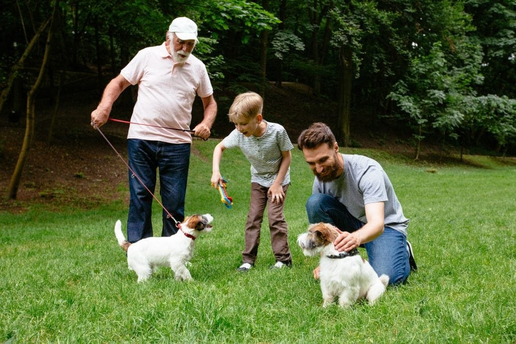 Happy family of father grandfather and son with Jack russel terrier dog having fun, laughing, running, walking together in park.