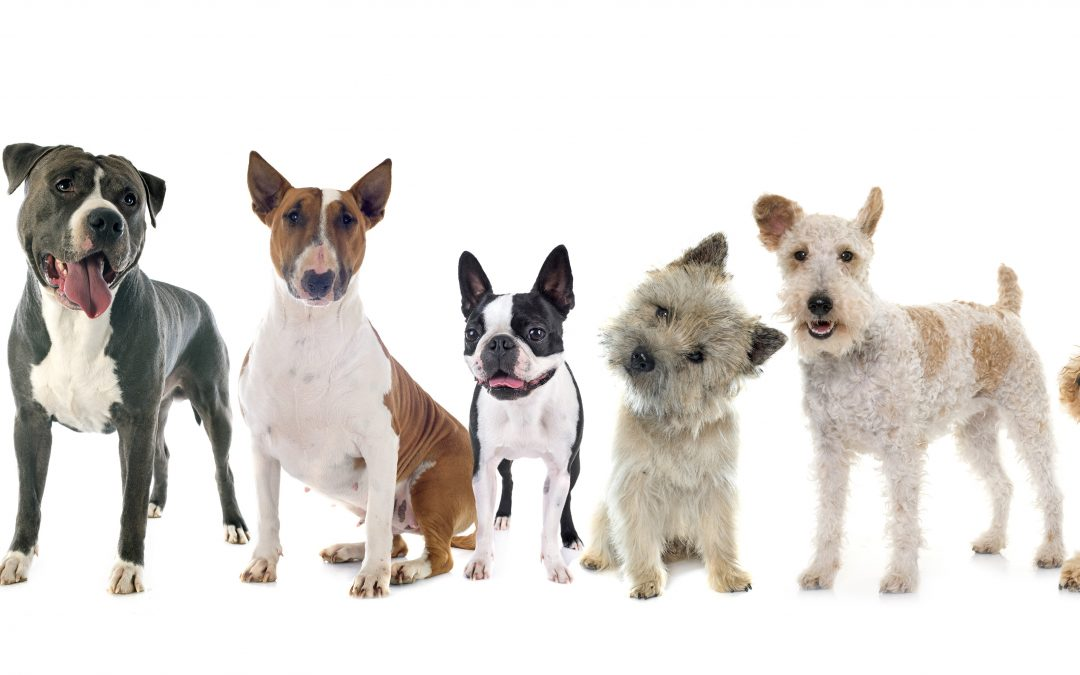 All You Need To Know Guide On Top 10 UK Terrier Breeds