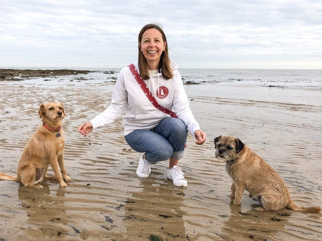 Terrier mix dog and border terrier dog with woman in jeans on the beach