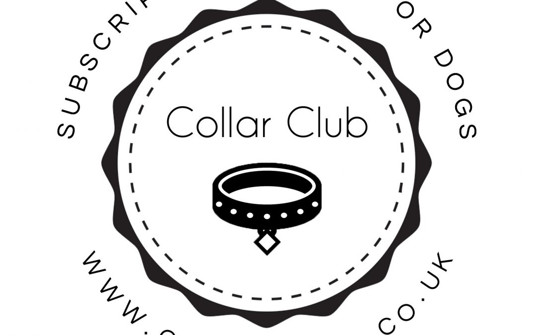 Brand Spotlight: Collar Club