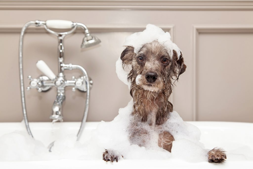 Crazy Dog Parent Blog a picture of an unhappy looking dog in the bath with lather all over it