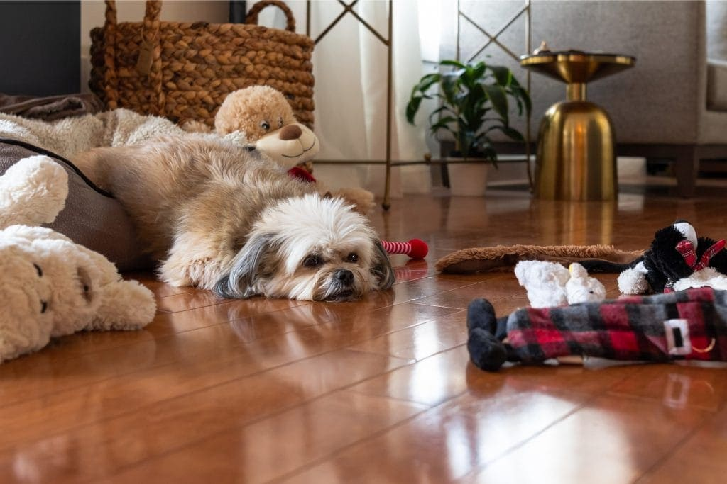 Crazy Dog Parent blog a picture of a white dog lying on a wooden floor surrounded by his toys