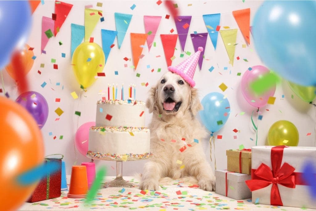 Crazy Dog Parent Blog a picture of a golden retriever with a pink birthday hat, a birthday cake, balloons and presents.