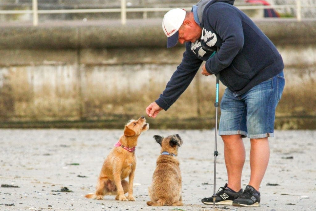 Crazy Dog Parent Blog a picture of a man on the beach with two dogs getting a treat